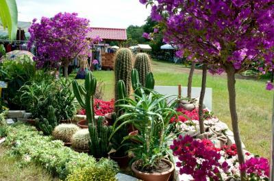 Annunci Cogefim azienda florovivaistica in vendita nel Nord Sardegna