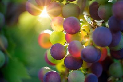 Annunci Cogefim azienda vitivinicola in vendita in provincia di Alessandria