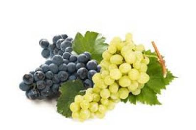 Annunci Cogefim azienda vitivinicola in provincia di Padova