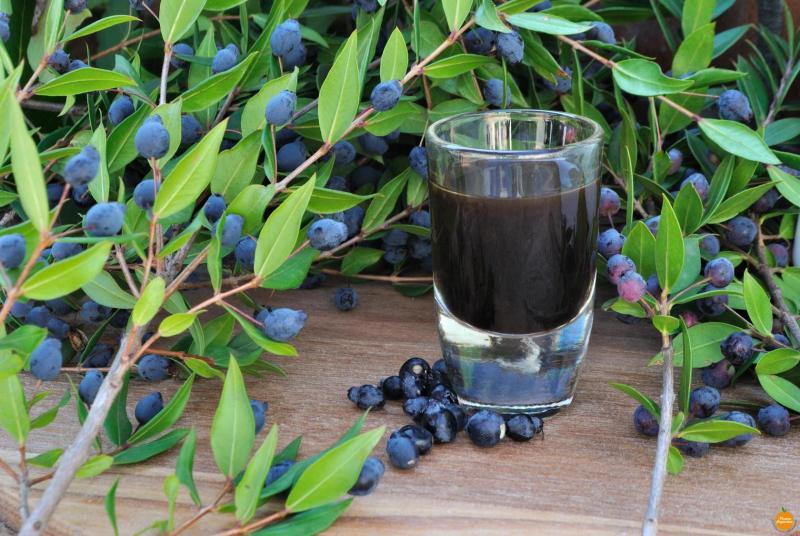 Annunci Cogefim produzione liquori in provincia di Cagliari